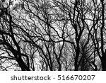 Autumn Trees   Crossed Branche...