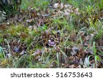 forest grass and flowers in... | Shutterstock . vector #516753643