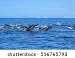 Dolphins Jumping In Mexico....