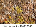 Colorful Lichens Growing On...
