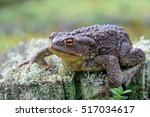 zoology. wildlife. a large... | Shutterstock . vector #517034617