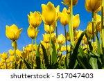 Beautiful Bouquet Of Tulips....