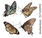 illustration of butterfly  on... | Shutterstock . vector #517144993