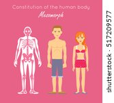 constitution of human body.... | Shutterstock .eps vector #517209577