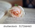 Pale Pink Single Rose On The...