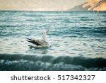 seagull | Shutterstock . vector #517342327