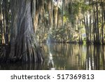 Swamp Bayou Scene Of The...