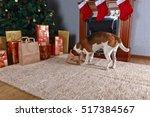 Cute Dog Checks Christmas Gift...