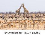 Wild Animals Pyramid With...