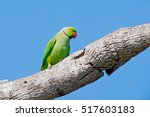 Green Parrot Sitting On Tree...