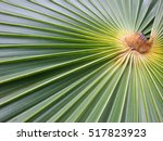 green tropical palm leaves....   Shutterstock . vector #517823923