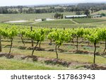 vinyard in hunter valley  new...   Shutterstock . vector #517863943