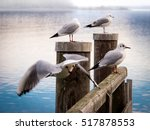 Wooden Jetty With Sea Gull