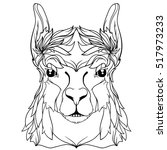 vector lama in lines. black and ... | Shutterstock .eps vector #517973233