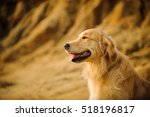 Golden Retriever Dog Against...