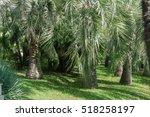 green  tropical palm forest | Shutterstock . vector #518258197