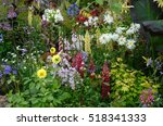 A Colourful Border With Wild...