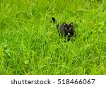 Stock photo black cat siting in the grass 518466067