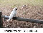 White Cockatoo               ...