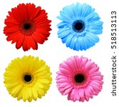 set of colorful gerbera flowers ... | Shutterstock . vector #518513113