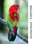chattering lory 2 | Shutterstock . vector #51851968