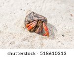 Hermit Crab On The Beach In...