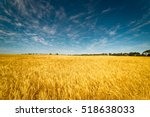 Field Of Golden Wheat Under Th...
