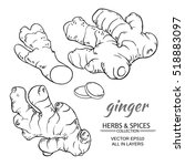 ginger vector set | Shutterstock .eps vector #518883097