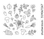 vector doodle floral set.... | Shutterstock .eps vector #519067267