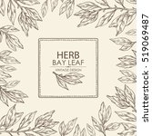 background with bay leaf. hand... | Shutterstock .eps vector #519069487