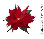 Poinsettia  Christmas Flower ...