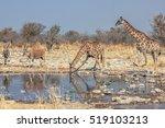 Wildlife  Elands And Giraffes...