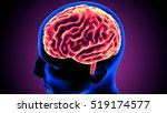 human x ray brain anatomy. 3d | Shutterstock . vector #519174577