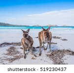 Kangaroos Visiting A Beach