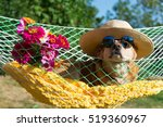 Dog With Sunglasses And Flower...