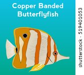 Copper Banded Butterfly Fish ...