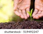 men hands are planting the... | Shutterstock . vector #519492247
