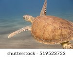 A Green Sea Turtle Swimming In...