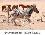 wild horses and zebra horse ... | Shutterstock . vector #519543313