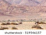 Wild Oryx Between Purple...