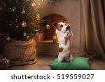 Jack Russell Terrier. Christma...