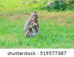 Mother Monkey With Baby Monkey...