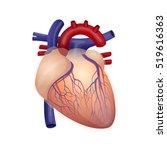illustration of the human's...   Shutterstock .eps vector #519616363