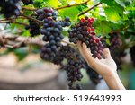 Farmer In His Vineyard Checkin...