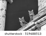 Two Cats On Ancient Stone...