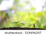 tree planting | Shutterstock . vector #519696247