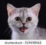 Kitten With Open Mouth ...