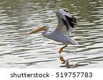Bird White Pelican Launch