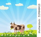 A Cow Grazes In A Meadow Eatin...