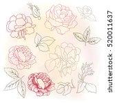 Stock vector rose flower set vector illustration 520011637